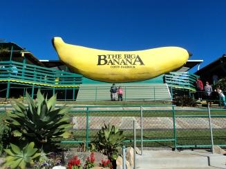 The Banana- Coffs Harbour