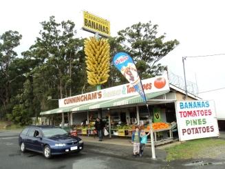 The big bunch of bananas- Coffs Harbour